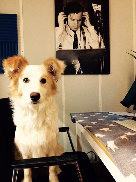 Studiohond Casper